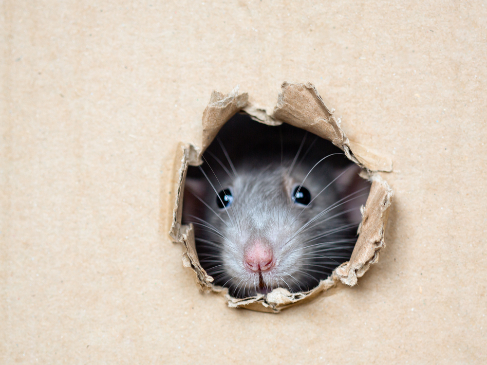 Tips On Keeping Bugs and Rodents Out of Your Storage Unit