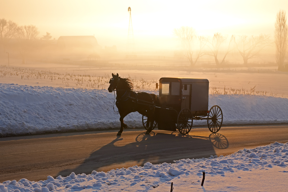 horse and carriage in snow at dusk