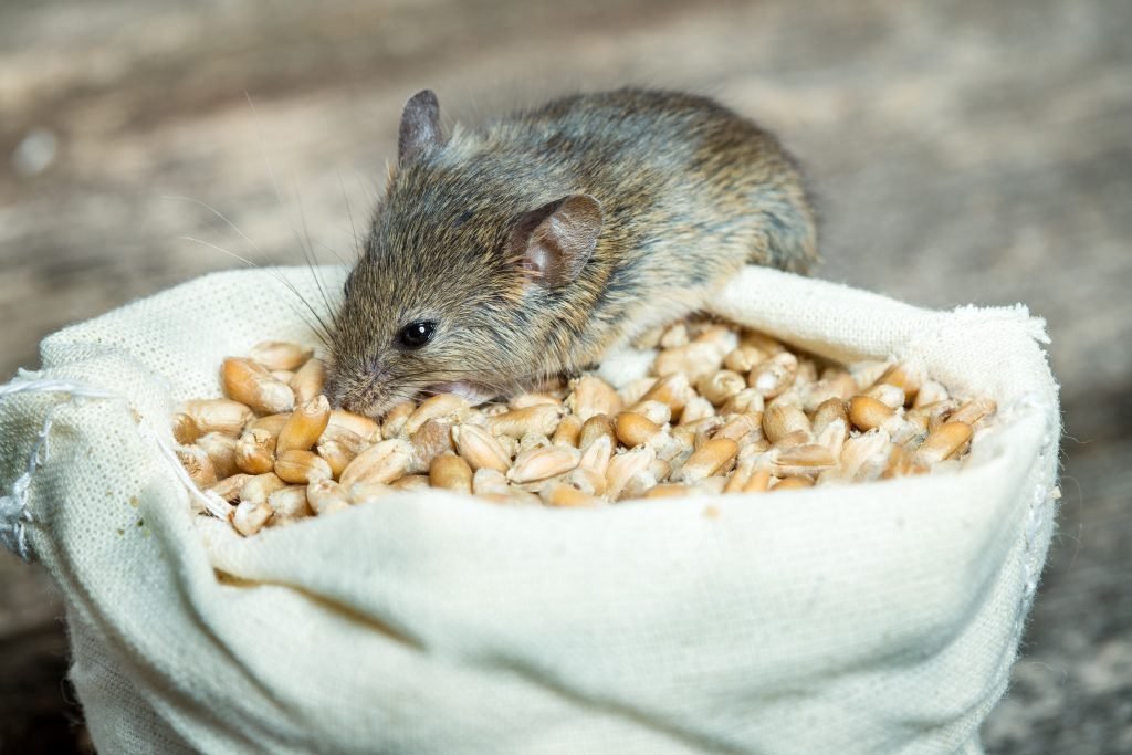 How to Get Rid of Mice in a Storage Unit